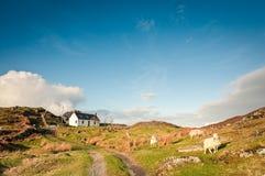 Ackerland, Schottland Stockfotografie