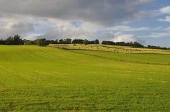 Ackerland in Schottland Lizenzfreie Stockfotos