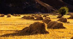 Ackerland in Shigatese Lizenzfreie Stockfotos