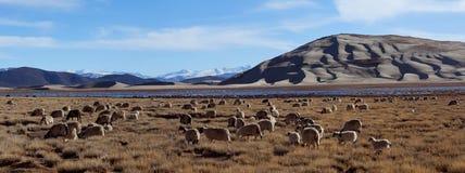 Ackerland in Tibet Stockbilder