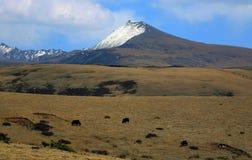 Ackerland in Tibet Lizenzfreie Stockbilder