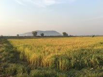 Ackerland um Siem Reap Stockfotos