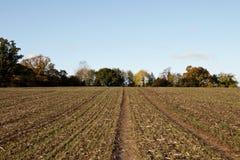 Ackerland umrandet durch herbstliche Bäume Lizenzfreies Stockbild