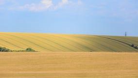 Ackerland und blauer Himmel Stockfotografie