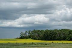 Ackerland- und Canolaernten, Saskatchewan, Kanada Stockfotografie