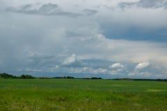 Ackerland- und Canolaernten, Saskatchewan, Kanada Stockfoto