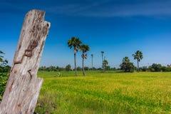 Ackerland und die Arengapalme in Thailand in Nonthaburi-Provinz Stockfoto