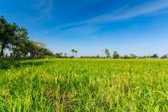 Ackerland und die Arengapalme in Thailand in Nonthaburi-Provinz Lizenzfreies Stockbild