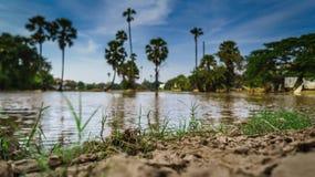 Ackerland und die Arengapalme in Thailand in Nonthaburi-Provinz Stockbilder