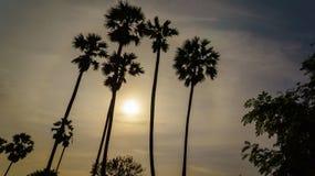 Ackerland und die Arengapalme in Thailand in Nonthaburi-Provinz Stockbild