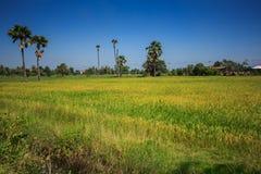 Ackerland und die Arengapalme in Thailand in Nonthaburi-Provinz Stockfotografie