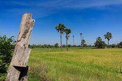 Ackerland und die Arengapalme in Thailand in Nonthaburi-Provinz Lizenzfreie Stockbilder
