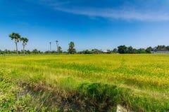 Ackerland und die Arengapalme in Thailand in Nonthaburi-Provinz Stockfotos