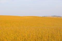 Ackerland und Felder Stockfotos