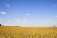 Ackerland und Felder Lizenzfreies Stockbild