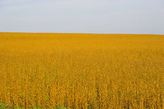 Ackerland und Felder Stockbilder