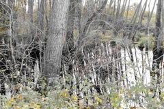 Ackerland und Flut Stockbild
