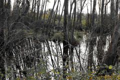 Ackerland und Flut Lizenzfreie Stockbilder
