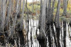 Ackerland und Flut Lizenzfreies Stockfoto