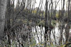 Ackerland und Flut Stockbilder