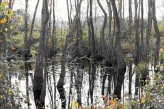 Ackerland und Flut Stockfotos