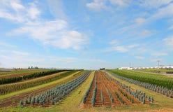 Ackerland und gepflanzte Ernten Stockfoto