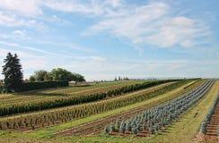 Ackerland und gepflanzte Ernten Lizenzfreies Stockfoto