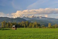 Ackerland und goldener Ohr-Berg, Pitt Wiesen Lizenzfreie Stockfotografie