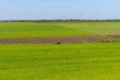 Ackerland und grüne Rasenflächen auf klarem blauem Himmel Panoramalandschaft Grünen Sie Wiesen Stockbilder