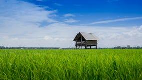 Ackerland und Hütte von Leuten in der Landschaft Stockfoto