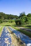 Ackerland und Haus in der Natur Stockfotos