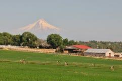 Ackerland und Mt.-Haube Stockfoto