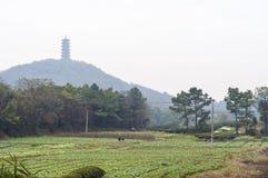 Ackerland und Pagode Stockbilder