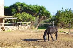 Ackerland und Pferd in Malta Lizenzfreies Stockfoto