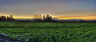 Ackerland und Reihen beleuchtet durch Morgensonne Stockbilder