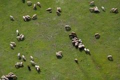 Ackerland und Schafe Stockfotos