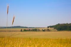 Ackerland und Weizen Stockbilder