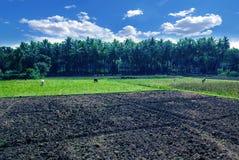 Ackerland von Indien Lizenzfreies Stockbild