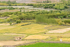 Ackerland von Leh, Ladakh Lizenzfreies Stockbild