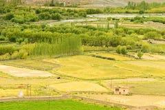 Ackerland von Leh, Ladakh Stockfotos