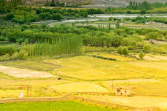 Ackerland von Leh, Ladakh Stockfotografie