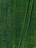 Ackerland von oben genanntem - Vogelperspektive eines üppigen Grüns archivierte im Sommer Lizenzfreie Stockfotografie