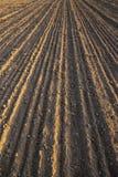 Ackerland, vor kurzem gepflogen und für das Säen des Landes bei Sonnenuntergang vorbereitet stockfotografie