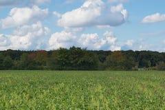 Ackerland zur Sommerzeit mit Feldern und Wald Stockbilder