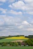 Ackerlandackerbau, -weizen und -Vergewaltigung gegen den blauen Himmel Stockfoto