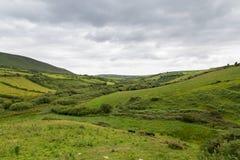Ackerlandfelder an der wilden atlantischen Weise in Irland Lizenzfreie Stockfotos