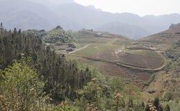 Ackerlandgepflanzte und Wartebearbeitung Lizenzfreie Stockbilder