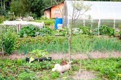 Ackerlandland vom Garten Stockbilder