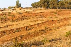 Ackerlandlandschaft in Äthiopien Stockbilder
