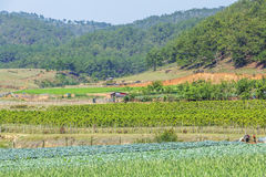 Ackerlandlandschaft im Sonnenschein Lizenzfreies Stockbild